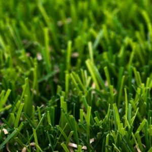 green-oasis-artificial-grass-1